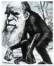 猴子.png